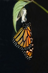 Celebrating Transformation - The Butterfly.